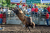HONOKAA RODEO MAY 26-27 2013 : 18 galleries with 735 photos
